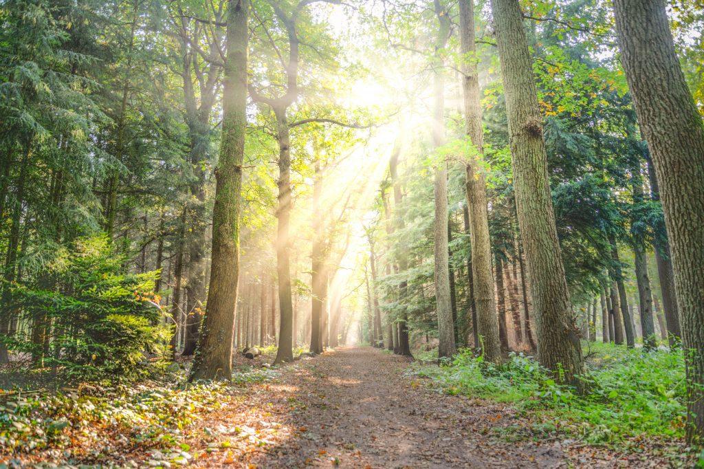 chemin voie ose oser intuition conscience suivre trouver écoute